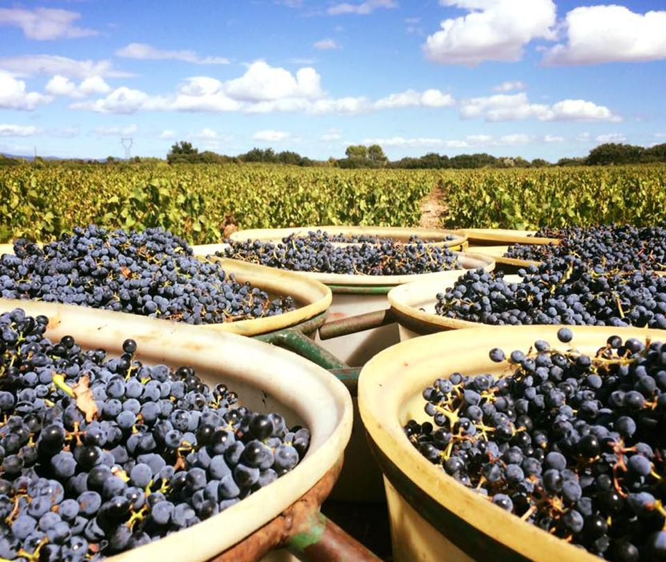 vin rouges saint chinian