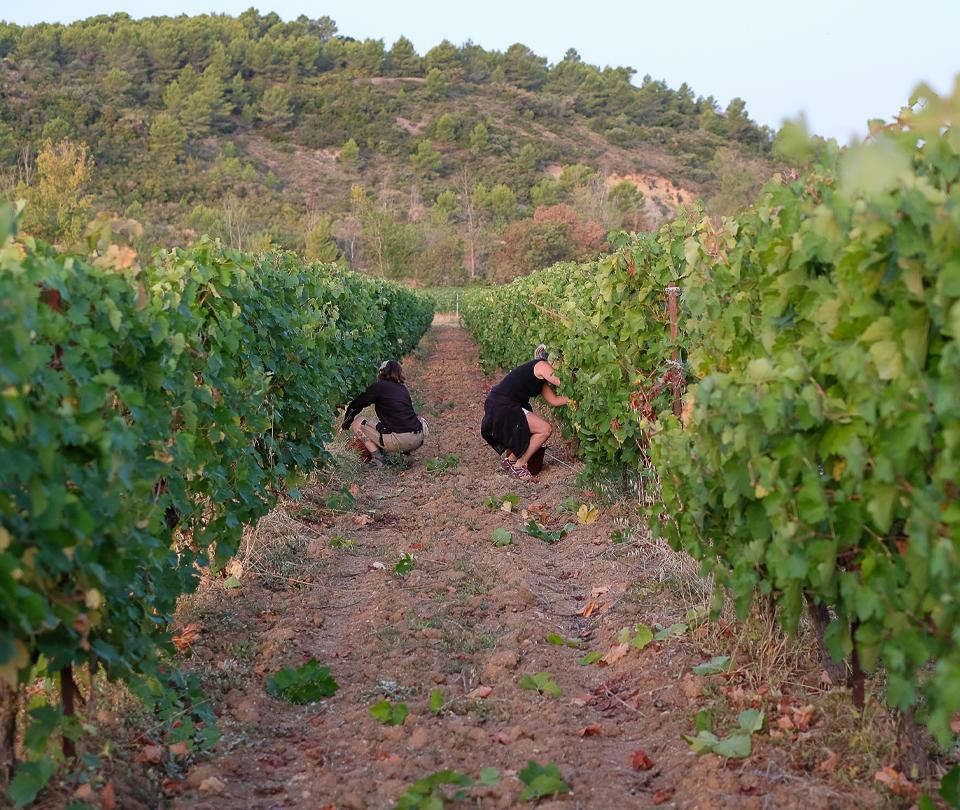 vin-bio-saint-chinian