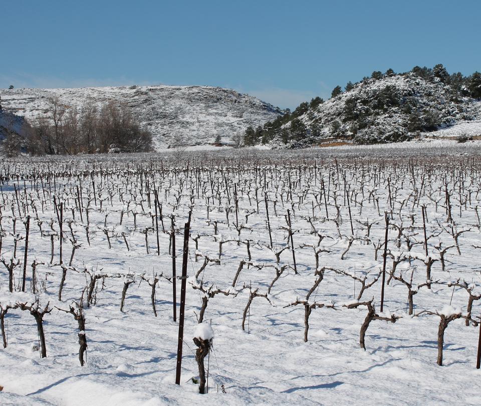 vin-biologiques-occitanie