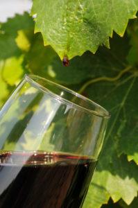 vin rouge Saint-Chinian photo